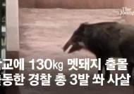 경남 초등학교 휘젓고 다닌 130㎏ 멧돼지···경찰 출동해 사살