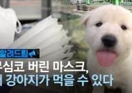 [알려드림] 마스크 때문에 강아지 숨졌다…버릴 땐 꼭 이렇게
