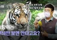 핥기 애교 부리면 피 철철? 폭풍성장한 한국 호랑이 남매