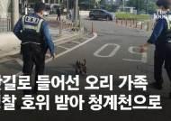 [영상]오리 뛰다…8차선서 발견된 오리, 경찰이 에스코트