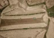 갈 곳 잃었던 가파도 찰보리…140톤 전량 수매자 찾았다