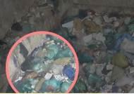쓰레기 매립지에 갈매기, 까마귀 몰려든 까닭