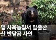 불법농장 탈출 반달곰, 다시 악몽의 철창 돌아간 '딱한 사연' [영상]