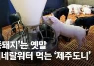 """전국민 사랑받는 제주흑돼지, 비싼 몸값에도 """"없어서 못팔아"""""""