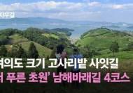 이 그림 같은 초원이 고사리밭? 국내 최대 고사리밭 공개(영상)