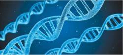 """""""인간 지놈의 대부분은 쓰레기, 기능하는 부분은 최대 25%"""""""