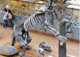 나무늘보가 기후변화로 배부른 채 죽어가는 까닭