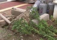 강풍에 노인 2명 추락사…충남 지역만 3명 목숨 잃어