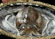 통통하게 살 오른 제철 갑오징어…춘곤증 해소에 딱!