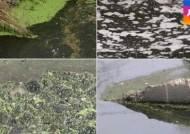 [탐사플러스] 사라진 해양 생명체…'죽음의 호수' 된 새만금을 가다