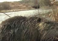 뉴트리아에 세균·기생충 '우글'…무분별한 취식 위험