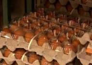중간 유통상에서도 '살충제 달걀'…소비자 불안감 확산