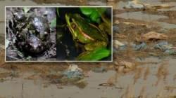 조성·지정만 해놓고 방치…'희귀종' 금개구리 서식지 실태