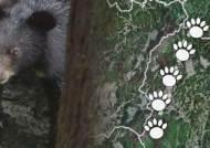 지리산 반달곰, 결국 수도산으로…사람과 공존이 문제