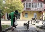 [해외 이모저모] '길고양이 돌보려'…캣맘 고용한 러시아 마을