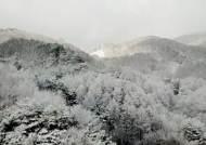 3월의 마지막 주말, 계절 역주행…벚꽃 대신 눈꽃 펑펑