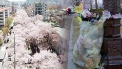 [밀착카메라] '벚꽃축제'는 눈부신데…'추태'에 눈살