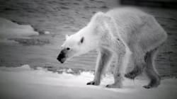 지구 온난화에 관광개발 추진까지…북극곰 생태 '수난'