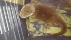탈진 직전 구조된 새끼 수달 '첫 외출'! 야생 적응은?