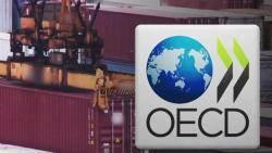 OECD, 한국 성장률 2.6→2.4%로 하향…수출 부진 영향
