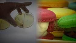 마카롱 '알록달록' 색 내려다…식중독균·과다색소 검출