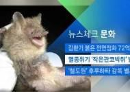[뉴스체크|문화] 멸종위기 '작은관코박쥐' 발견