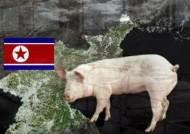 '북 돼지열병' 멧돼지·독수리 이동 비상…접경 긴급방역