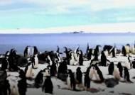 '남극 지킴이' 한국 주도로…'제2의 펭귄마을' 만든다