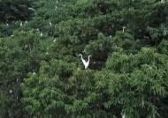 [밀착카메라] '길조'의 반전?…주택가로 날아든 '백로떼'