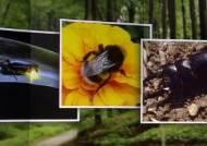먹고, 기르고, 치료하는 곤충 14종…가축으로 '신분 상승'
