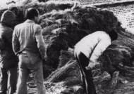 화성 사건과 다른 '5건'…이춘재 범행 수법과 '판박이'