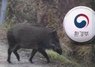 방역 당국 '저지선' 설정…구역 내 멧돼지 전부 없애기로