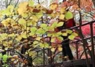 '가을철 단풍 산행 주의'…강원 산악사고 잇따라