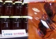 '꿀에 절인 말벌'이 특효약?…팔아선 안 될 '독약'