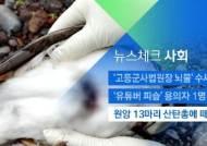 [뉴스체크|사회] 원앙 13마리 산탄총에 떼죽음