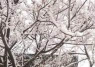 전국 곳곳 눈, 출근길 빙판 주의…한낮에도 영하권