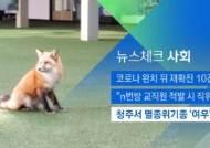 [뉴스체크|사회] 청주서 멸종위기종 '여우' 출몰