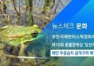 [뉴스체크|문화] 태안 두웅습지 금개구리 복원 성공