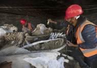 멕시코서 수백 마리 매머드 뼈 발견…세계서 가장 큰 규모