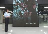 [날씨박사] 벚꽃이 역주행?…가을에 꽃망울 터뜨린 이유는