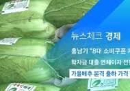 [뉴스체크|경제] 가을배추 본격 출하 가격 안정세