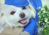 학대 의심 받던 강아지 '경태', 명예 택배기사 됐다 브리핑ON