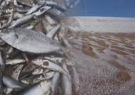 죽은 물고기 뒤덮인 바다, 사막에 눈…온난화의 역습