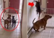 [영상] 어, 이거 봐라? 생후 3개월 강아지 탈출 도운 조력자는 바로