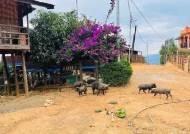 """""""거리엔 돼지만 남아""""…계엄령에 유령 도시된 미얀마 민닷"""
