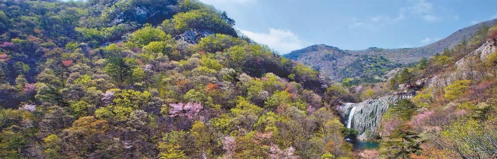 [커버스토리] 파릇파릇 숲, 알록달록 야생화, 팔딱팔딱 갯것 생동감 넘쳐