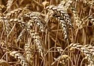 세계 4대 농업 기업, 곡물 거래에 블록체인 도입