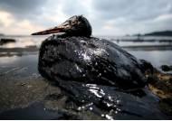 태안 앞바다 기름 대재앙