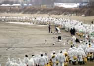 검은 절망 걷어낸 23만의 땀 업그레이드 자원봉사