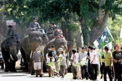 [사진] 온난화 대책 촉구 코끼리 행진